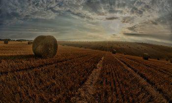 L'agricoltura del futuro secondo il CER