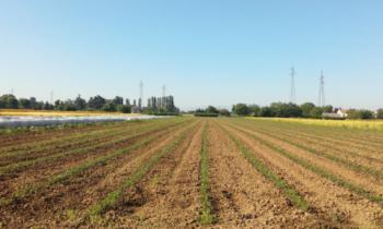 Irrigazione di precisione Kickoff meeting progetto POSITIVE PDF da scaricare